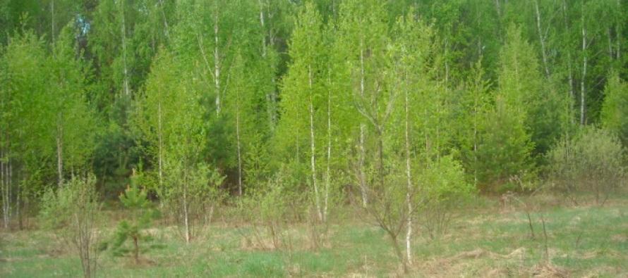 Крестьянские поля зарастают лесом