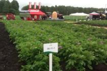 День картофельного поля