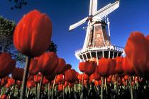 Королевство Нидерланды направило в Тюменскую область несколько тысяч иностранцев