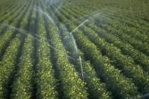 Аграрии из 54 регионов России получат более 2,27 миллиарда рублей федеральных субсидий на развитие мелиорации