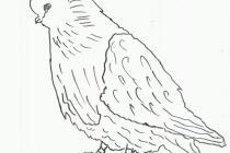 «Голуби Юрия Неёлова» издадут в раскрасках Общественного Совета при департаменте труда и занятости населения Тюменской области