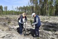 Всероссийская акция по посадке леса традиционно пройдет и в Тюменском районе в субботу, 18 мая