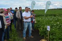 Челябинские и самарские картофелеводы вместе выращивают семенной картофель