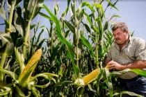 Битва за урожай: с чем и как боролись аграрии в сезоне 2019