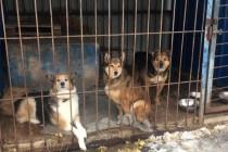 Тюменские активисты ОНФ провели экологическую акцию ко Дню защиты прав животных
