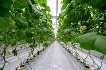 ТЕХНОНИКОЛЬ расширяет производство субстратов для сельского хозяйства
