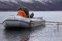 На норильском рыбозаводе вылупились личинки боганидского гольца