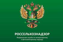 Управлением Россельхознадзора досмотрена  свежая клубника и черешня из Киргизии